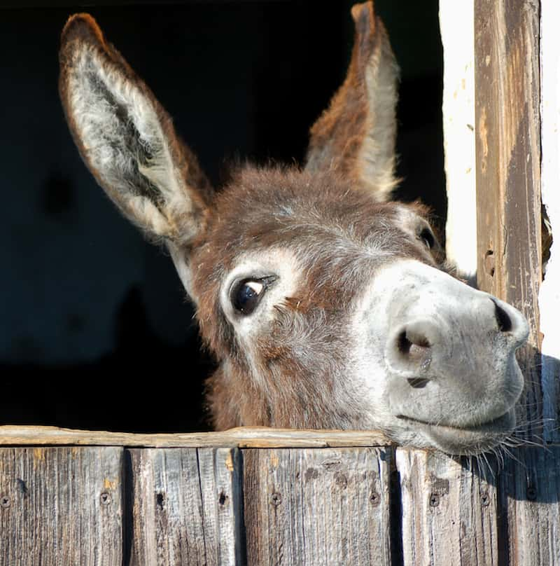 teachers are treated like abused donkeys